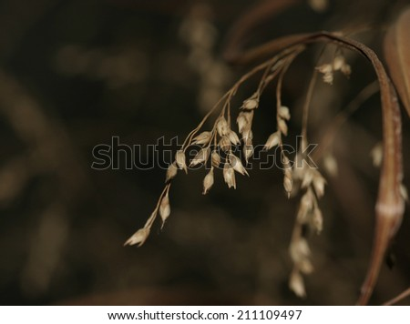 Prairie grass background with seed strand in foreground - stock photo