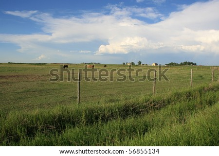 Prairie scene in Alberta, Canada; blue skies, storm clouds in the distance; horses grazing; green grass; field; summertime - stock photo