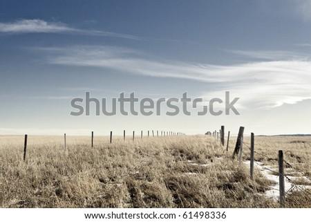 Prairie wheat field - stock photo