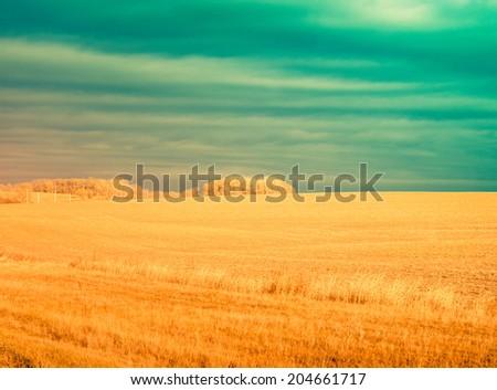 prairie , with instagram retro instagram processing - stock photo