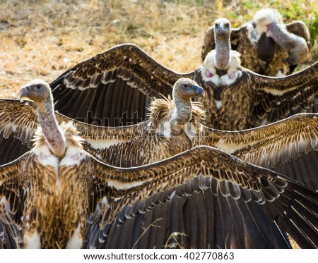 Predator birds are sitting on the ground. Kenya. Tanzania. Safari. East Africa. An excellent illustration. - stock photo