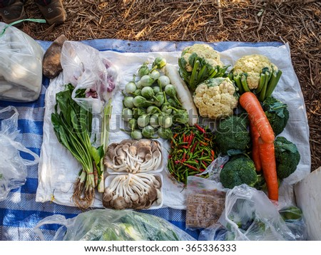 Prepare set of vegetables in the camping before cooking - stock photo