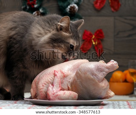 Preparing for the new year. Crude chicken for the holiday table on a platter. Impudent cat steals a chicken. Licked chicken carcass. Christmas decorations, gifts in the background. New Eve - stock photo
