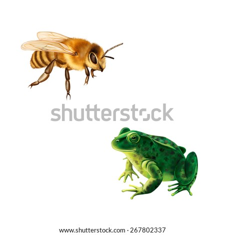 Pretty bee , Green frog with spots, spotted toad, Isolated on white - stock photo