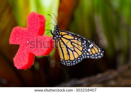 Pretty butterfly with orange and black colors - stock photo