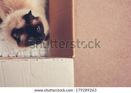 Pretty cat is hiding in a cardboard box - stock photo