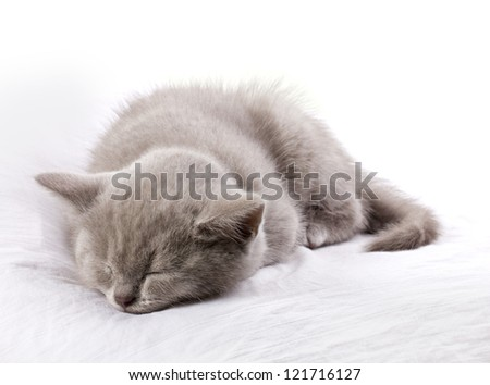 pretty cat looking down from the hole in paper isolated on white - stock photo