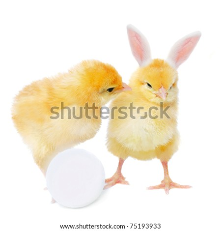 pretty chicken with egg and bizarre bunny, isolated on white - stock photo