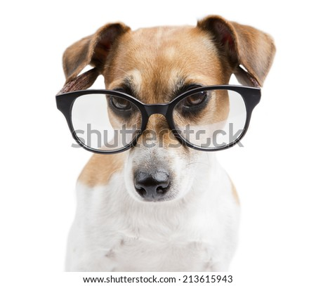 Pretty clever dog stylish reading glasses with black frames. White background - stock photo