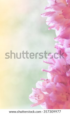 Pretty Colorful Pastel Pink Azalea Flower Bouquet  on side against dreamy green bokeh and golden abstract sunshine background with room or space above for copy, text, your words. Vertical instagram - stock photo