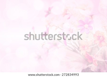 pretty flowers blooming in soft and blur style for background - stock photo