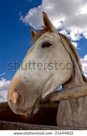 Pretty grey horse head shot in front of a blue background with white clouds. - stock photo