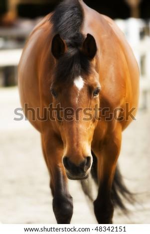 pretty mare - stock photo