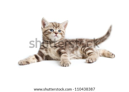 pretty marmoreal british kitten lying isolated on white - stock photo