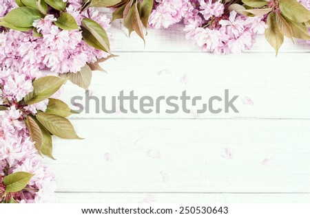 Pretty Pastel Pink Cherry Blossoms along top and side of Painted Rustic White Board Background with room or space for copy, text, your words.  Looking down on Horizontal, faded bypass with tint  - stock photo