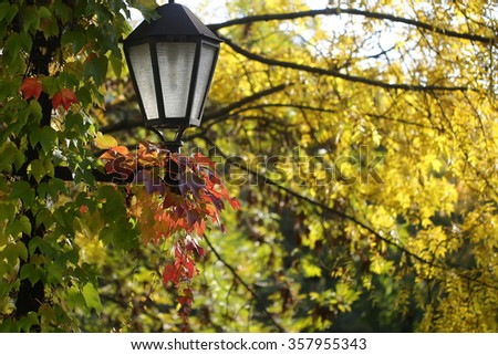 Pretty picturesque view of vintage black lantern on background autumn vivid yellow green foliage of tree beautiful seasonal changes natural wallpaper decor urban scene backdrop outdoor, horizontal - stock photo