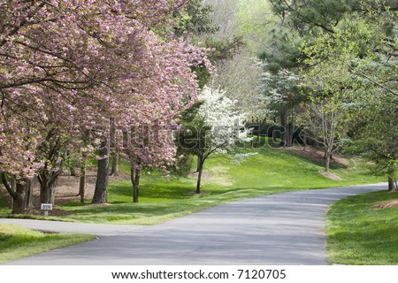 Pretty Pink and White Spring Tree Blooms in the Driveway - stock photo