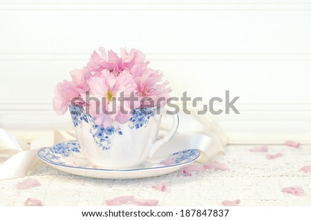 Pretty Pink Cherry Blossoms in a Tea Cup on Rustic on lace cloth.   White Board Background with room or space for copy, text.  Horizontal, high key, short depth of field. - stock photo