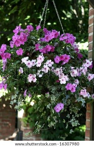 Pretty pink flowers in hanging basket - stock photo