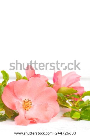 Pretty Pink Rose with Leaves on Rustic White Board Table with Room or Space in White Background Above Top for Copy, Text, Your Words.  Vertical - stock photo