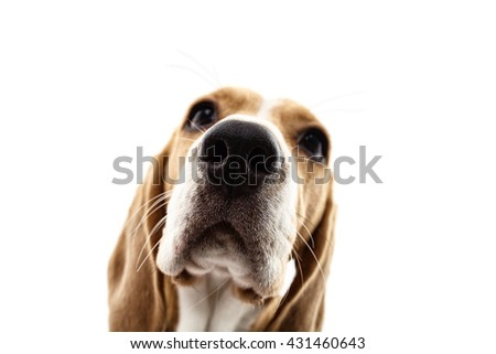 Pretty puppy is staring with curiosity - stock photo