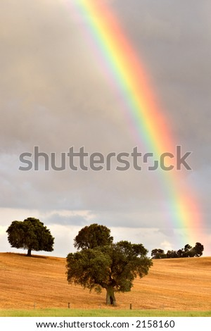 pretty rainbow in a field with trees - stock photo