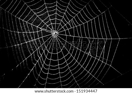pretty scary frightening spider web for halloween - stock photo
