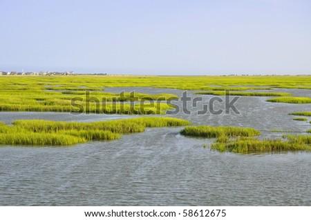 Pretty view of pristine Marshland - stock photo