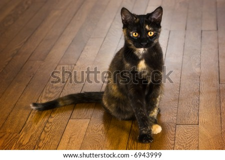 Pretty young cat sitting on a wooden floor. - stock photo