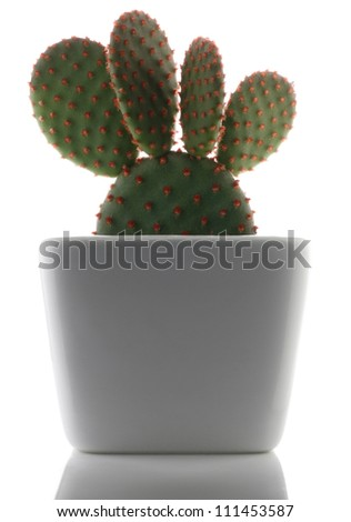 Prickly Pear Cactus A potted plant isolated on white - stock photo