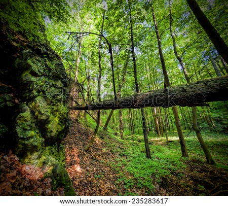 Primeval forest in Southern Poland - stock photo