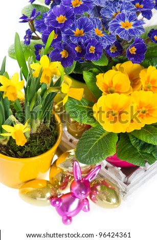 primulas and narcissus in pot on white background. spring flowers with easter eggs decoration - stock photo