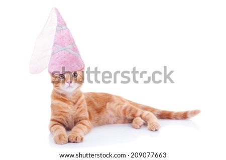 Princess cat in pink Halloween costume isolated on white with copy space - stock photo