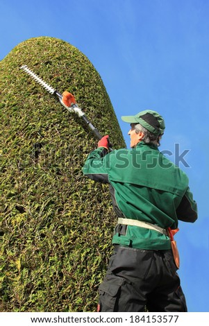 professional gardener trimming thuja with hedge clippers. Precision work in a topiary garden. Side view. - stock photo