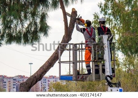 Professional Lumberjacks cuts trunks on the crane with a chainsaw, - stock photo