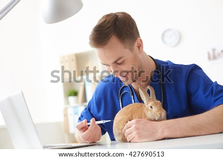 Professional male veterinarian is curing an animal - stock photo