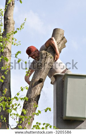 Professional tree worker - working from bucket lift. - stock photo