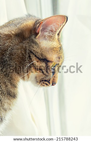 Profile cat looks to the windows - stock photo