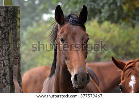 Profile of a brown horse - stock photo