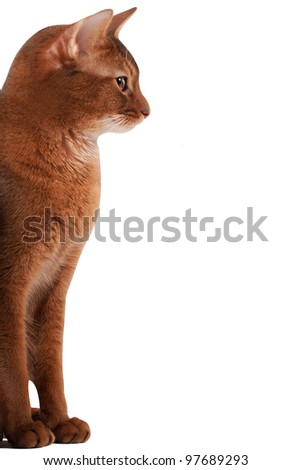 profile of a red cat - stock photo