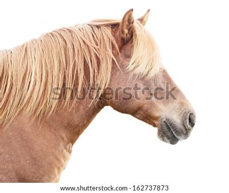 Profile of beautiful horse with golden mane. - stock photo