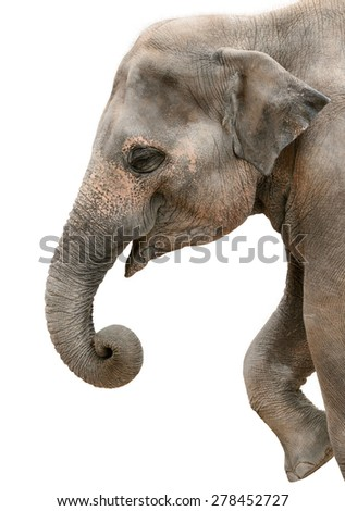 Profile portrait of a happy elephant isolated on pure white - stock photo