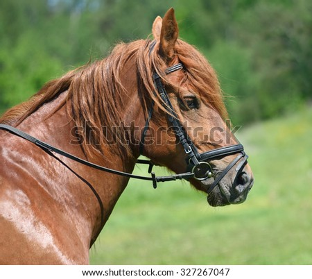 Profile portrait of bay horse on a green background - stock photo