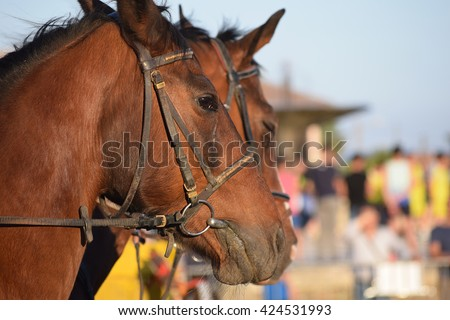 Profile portrait of beautiful horses - stock photo