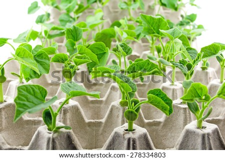 Propagation of plant sprout in white egg  tray - stock photo