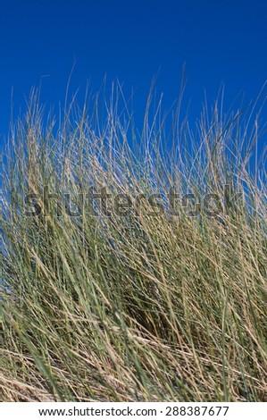 Protected Dunes - stock photo