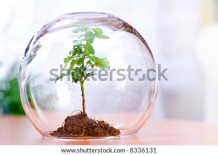 Protected green plant inside a glass sphere - stock photo