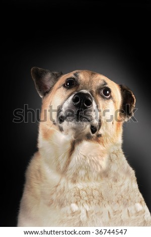 Proud dog ready to be your best friend. - stock photo