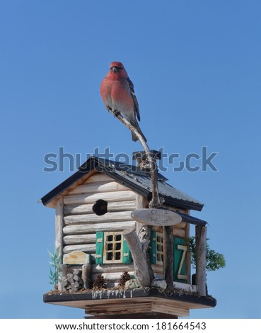 proud male pine grosbeak perched on feeder - stock photo