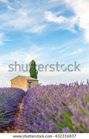 Provence, Valensole Plateau, lavender fields full of purple flowers. - stock photo